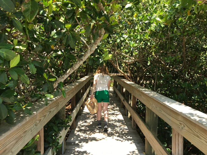 Mangrove walkway