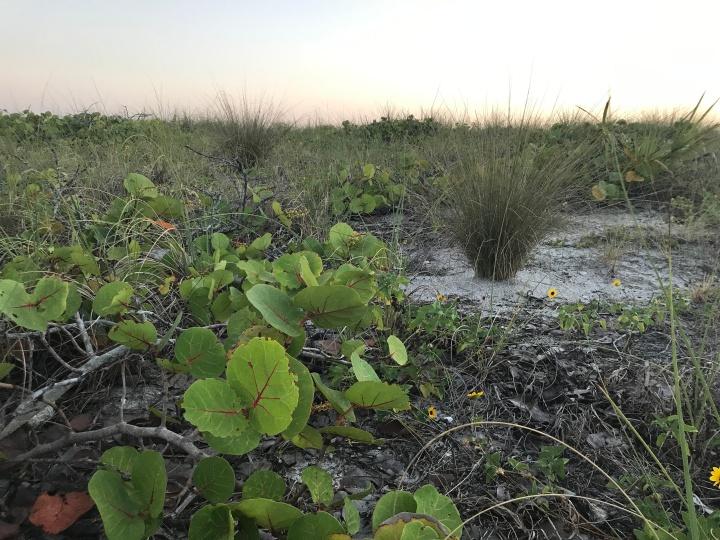 Mangroves at dusk