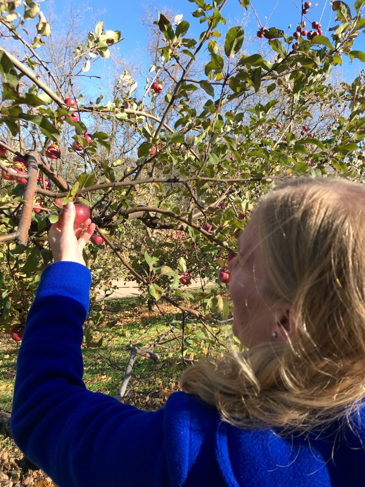 orchard 10