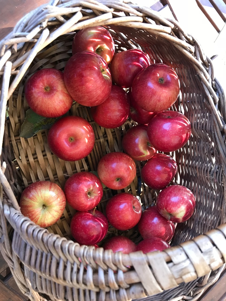 orchard 11