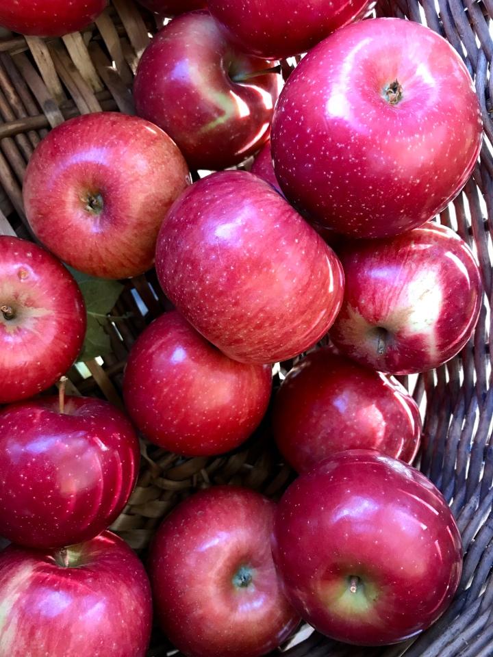 orchard 13