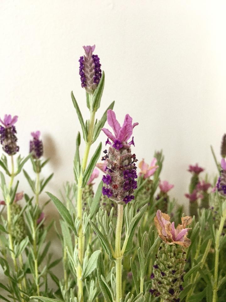 photo of lavender madeleine cake